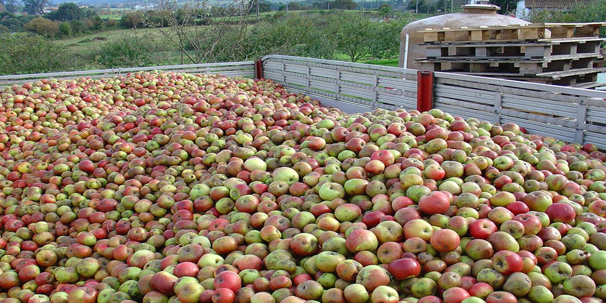 como hacer la sidra de manzana